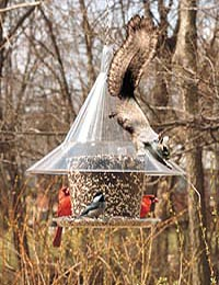 SKY CAFE BIRD FEEDER