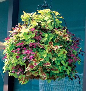 16 DOUBLE TIER IMPERIAL HANGING PLANTER