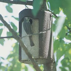 1 1/2 TREE TRUNK BIRDHOUSE