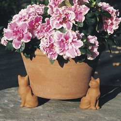 Cat Pot Feet