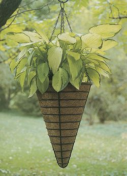 BLACK 14 CONICAL HANGING BASKET/LINER SET