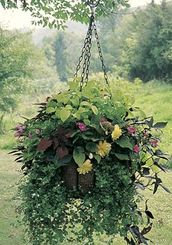 MEDIUM HANGING GARDEN-EURO CLASSIC