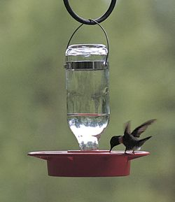 SMALL 8 OZ HUMMINGBIRD FEEDER