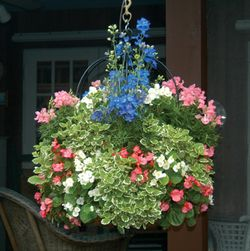 16 SINGLE TIER IMPERIAL HANGING PLANTER