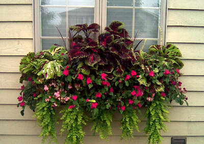 24 WINDOW BOX PLANTER & LINER SET