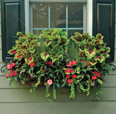 44 WINDOW BOX PLANTER & LINER SET