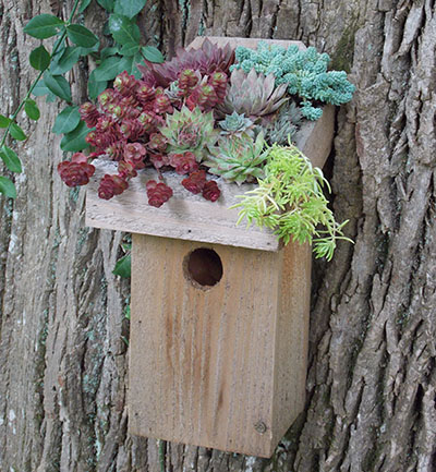 GREEN ROOF BIRD CHALET