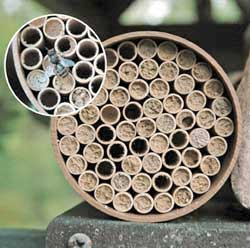 STANDARD MASON BEE NEST KIT  (68 Tubes)