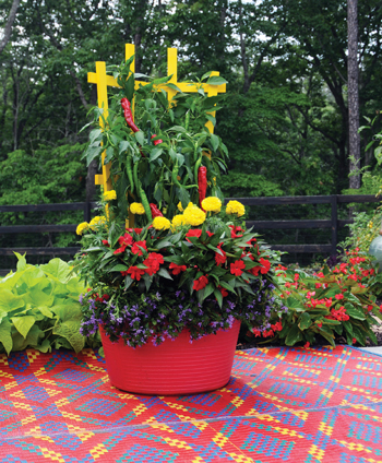 COLORFUL TRELLISES