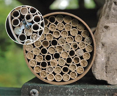 Jumbo Mason Bee Nest Kit (118 Tubes)
