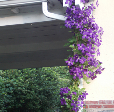 Image Result For Rain Gutter Covers Reviews