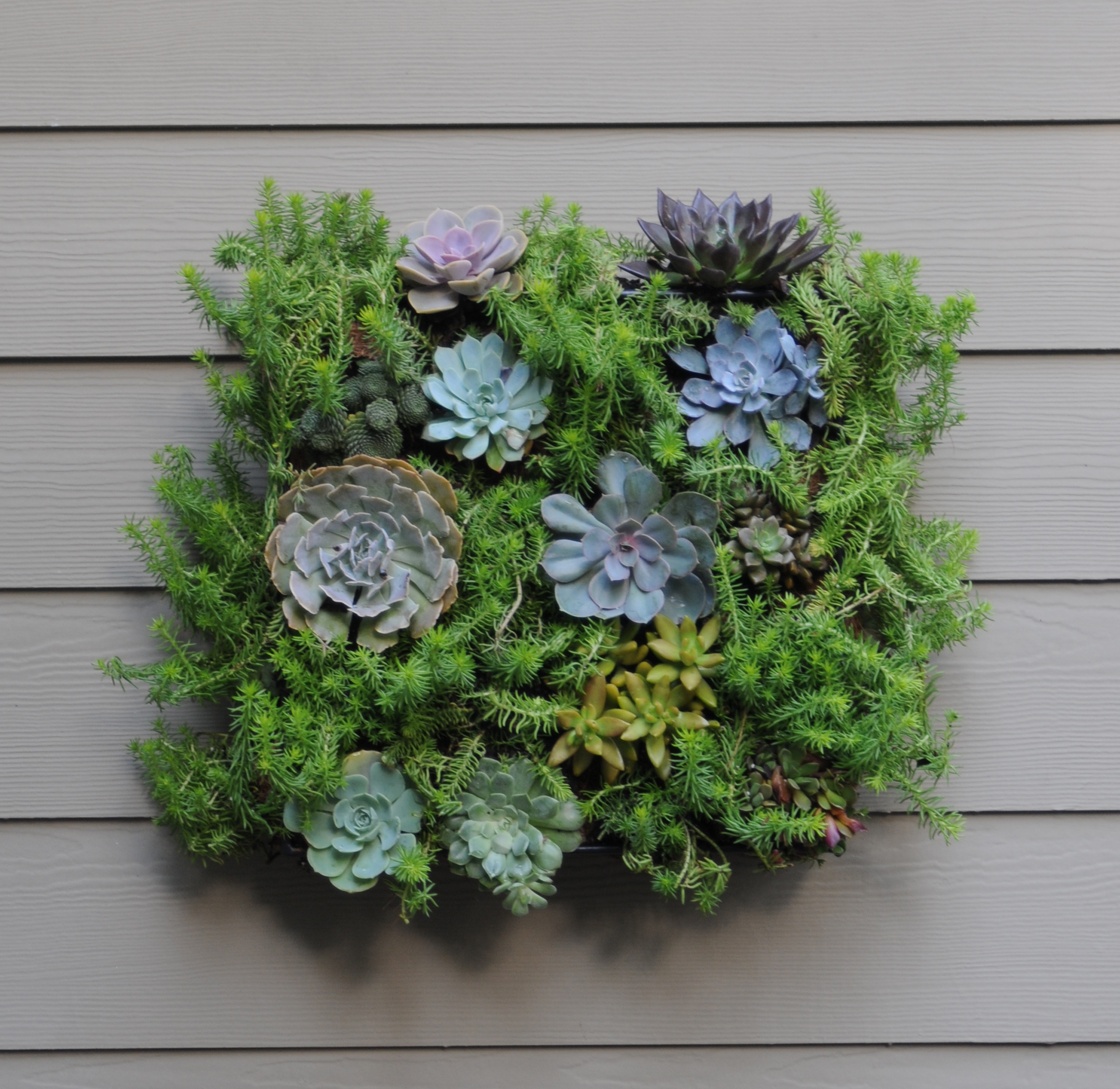 Living Wall Planters - PAMELA CRAWFORD LIVING WALL PLANTER W/