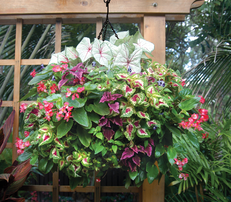 Hanging Planter Photo Gallery
