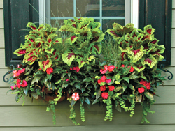 Window Box Planter and Wall Planter Photo Gallery